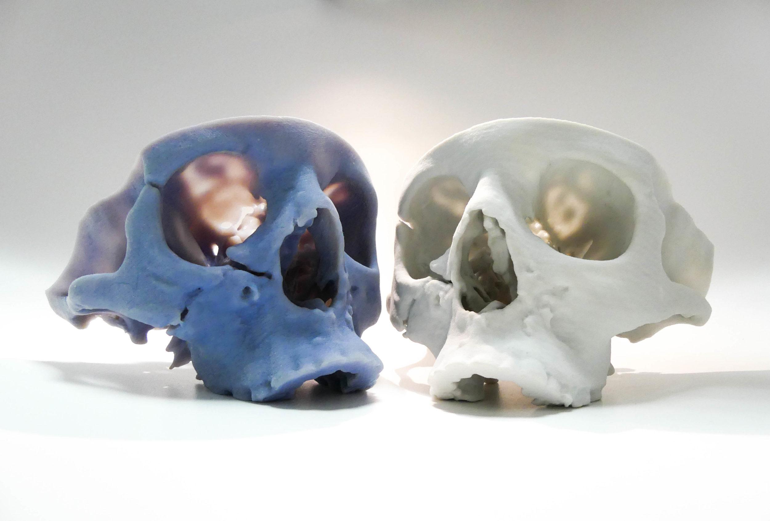 P1000324 Le crâne